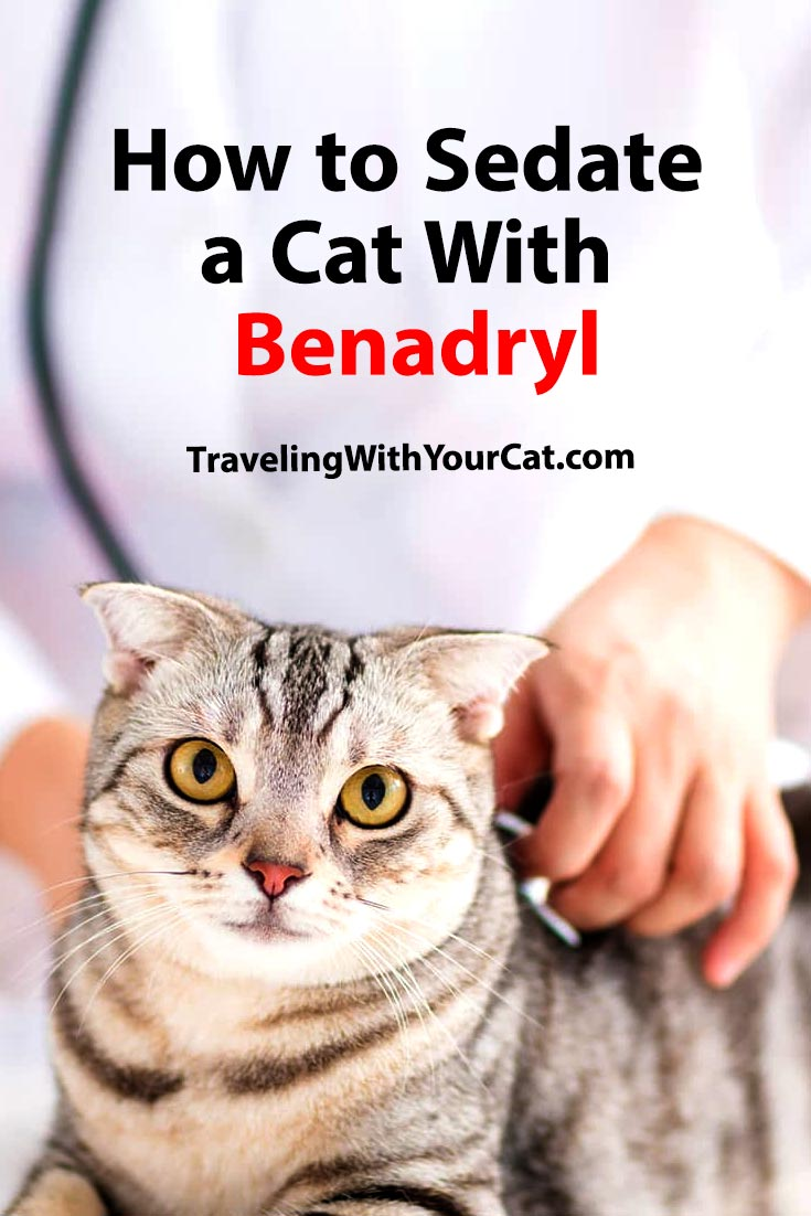 How to Sedate a Cat With Benadryl
