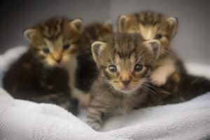 why cats move their kittens