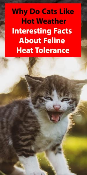 Why Do Cats Like Hot Weather