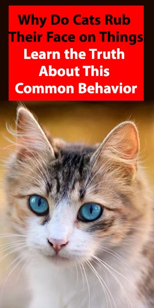 Why Do Cats Rub Their Face on Things: Learn the Truth About This Common Behavior