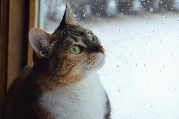 Why Do Cats Scratch Windows