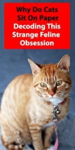 Why Do Cats Sit On Paper: Decoding This Strange Feline Obsession
