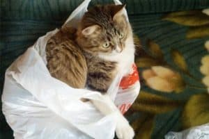 Why Do Cats Urinate On Plastic Bags