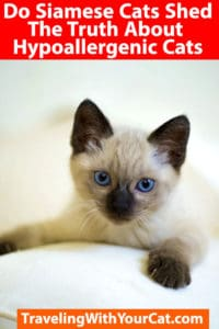 Do Siamese Cats Shed