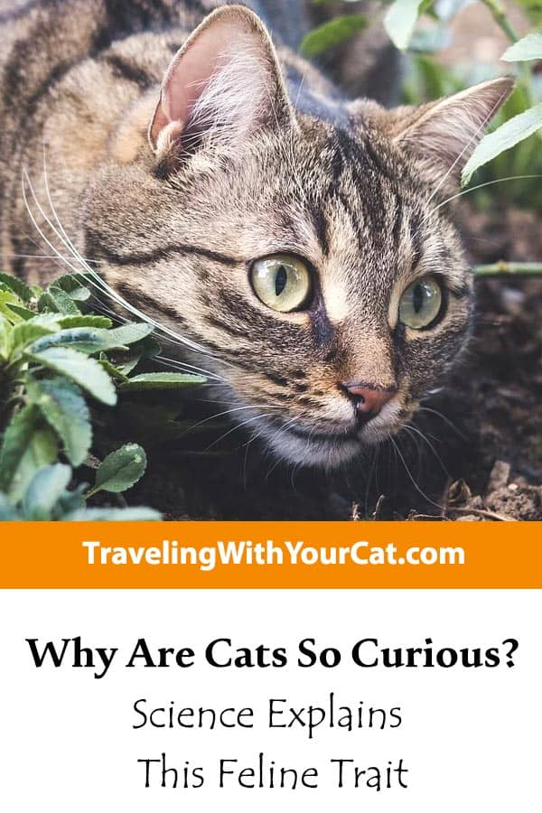 Why Are Cats So Curious
