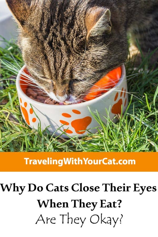 Why Do Cats Close Their Eyes When They Eat