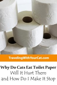 Why Do Cats Eat Toilet Paper