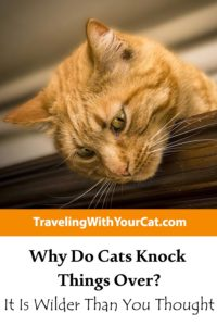 Why Do Cats Knock Things Over