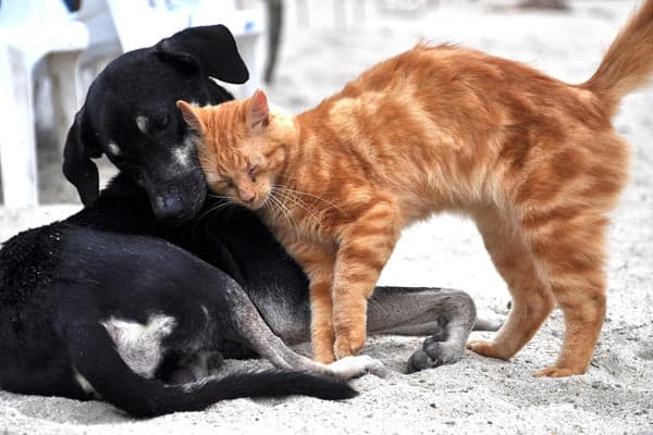 Why Do Cats Lick Dogs
