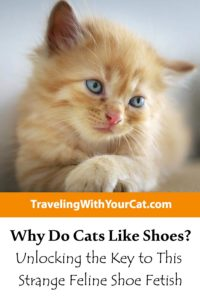 Why Do Cats Like Shoes