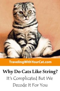 Why Do Cats Like String