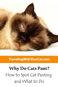 Why Do Cats Pant
