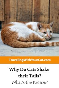 Why Do Cats Shake their Tails