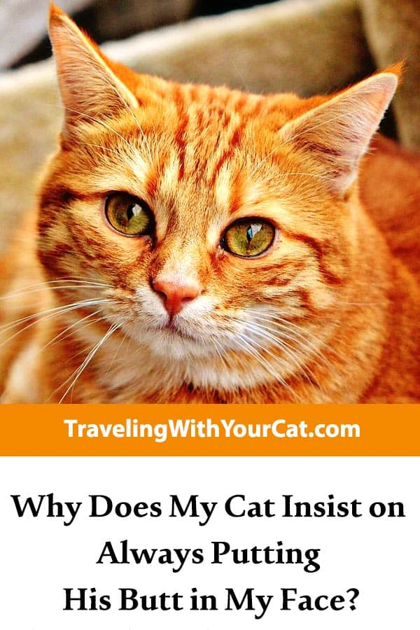 why do cats put their butt in your face