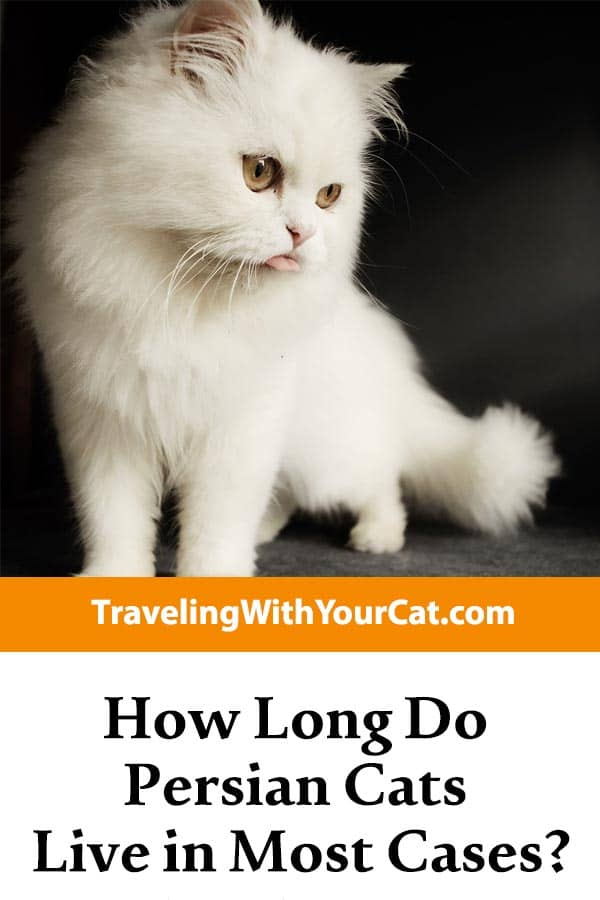 How Long Do Persian Cats Live